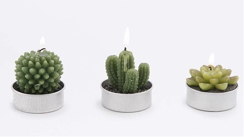 cactus-Urban-Outfitters