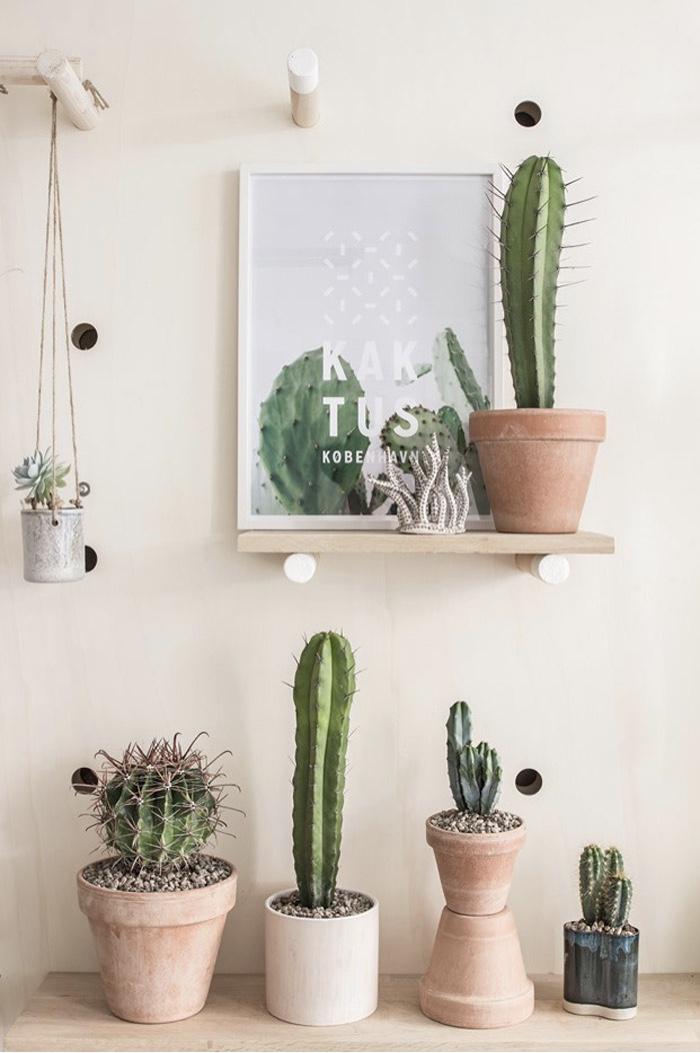 cactus-leja