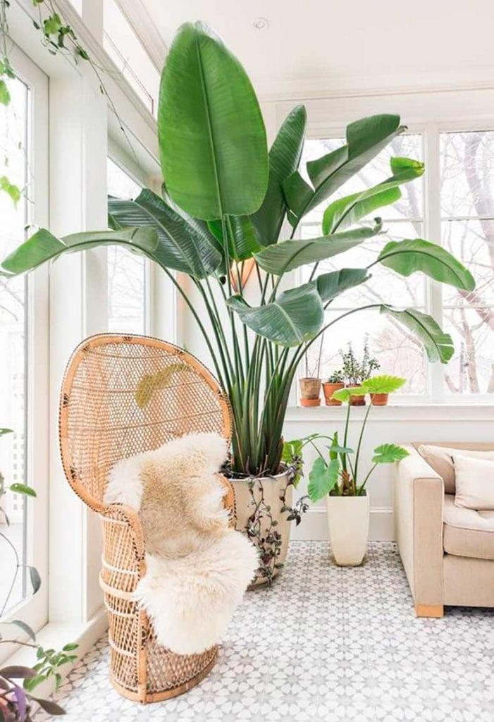 plantas de moda
